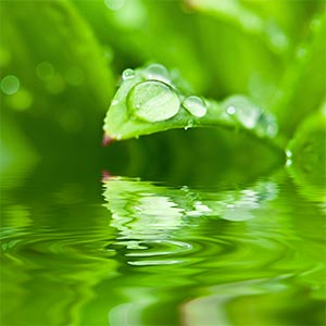 Tiny drops of water on a small green leaf.